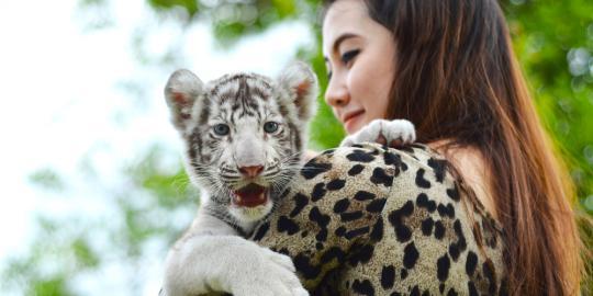 cinta hewan