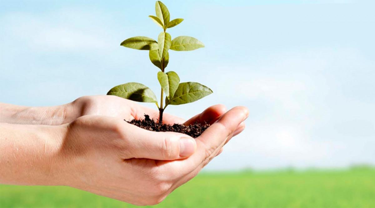 Memelihara Lingkungan Dan Hewan Sekitar Kita