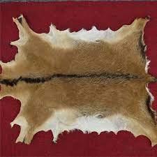 kulit hewan