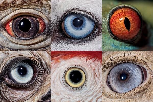 Dibalik Mata Setiap Hewan Ada Kehidupan