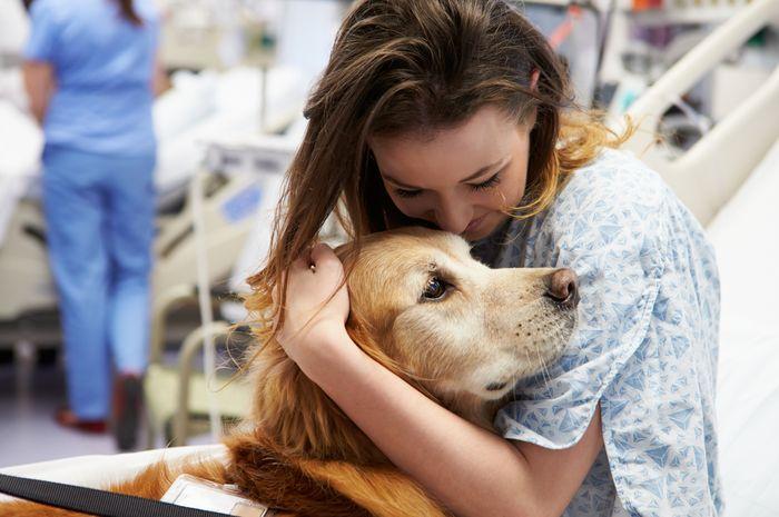 Bagaimana Terapi Bantuan Hewan Hewan Peliharaan Membantu Pasien?